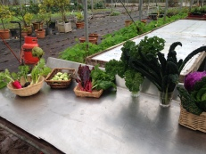 The winter crop from the glasshouse; including kales, beetroots, root veg